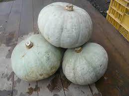 雪化粧かぼちゃ