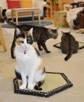 猫ホイホイ畳って何?